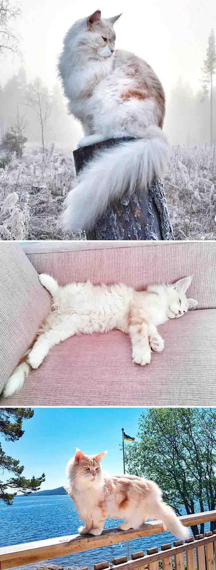fotos de gato instagram