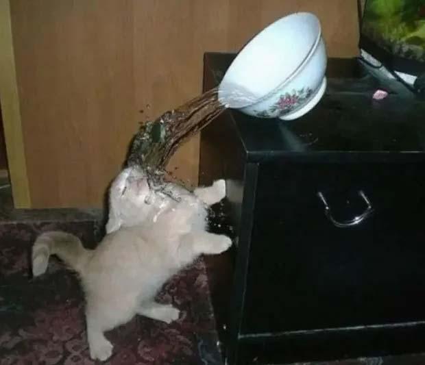 fotos engraçadas de gatos