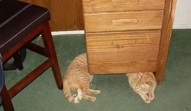 fotos engraçadas gatos