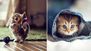 fotos gatinha mais fofa do mundo