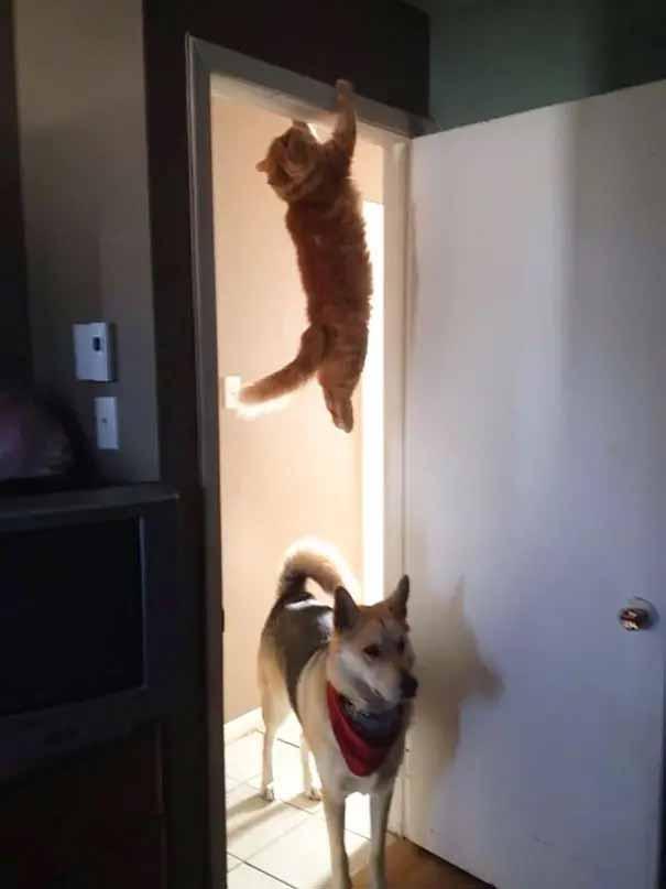 fotos gatinhos mais desastrados da internet