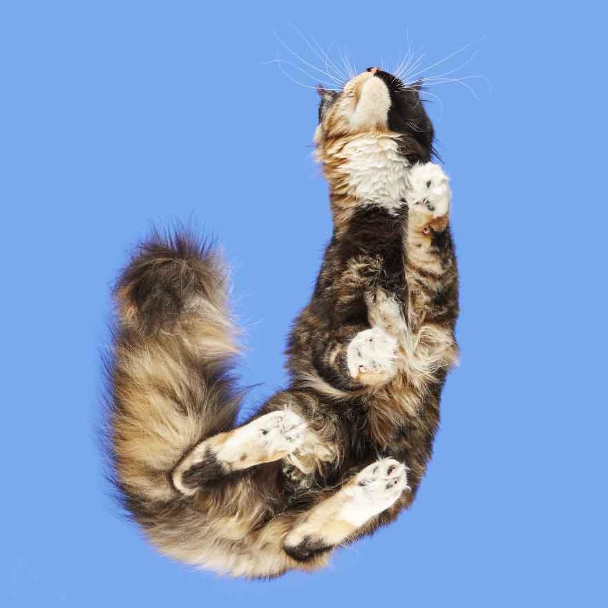 fotos gatinhos sobre mesas de vidro