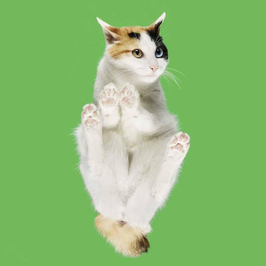 fotos gatos mais lindos