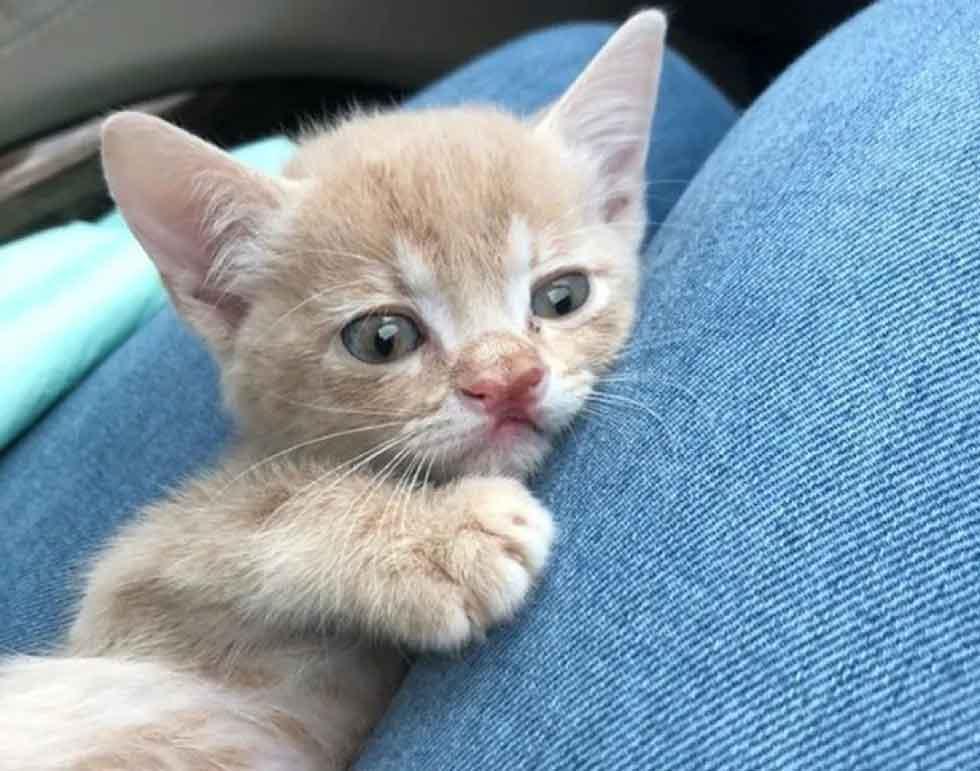 gatinho-mais-fofo-do-mundo