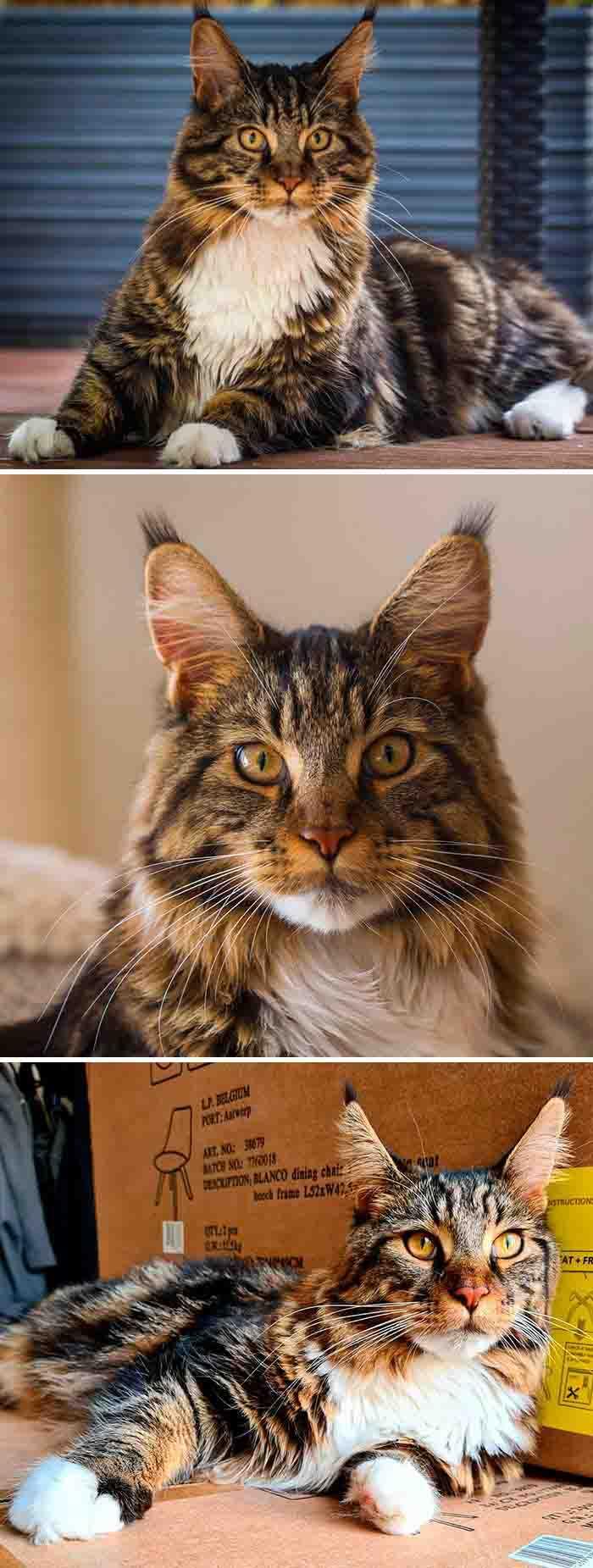 gatinhos incríveis instagram