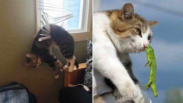 gatinhos mais desastrados da internet
