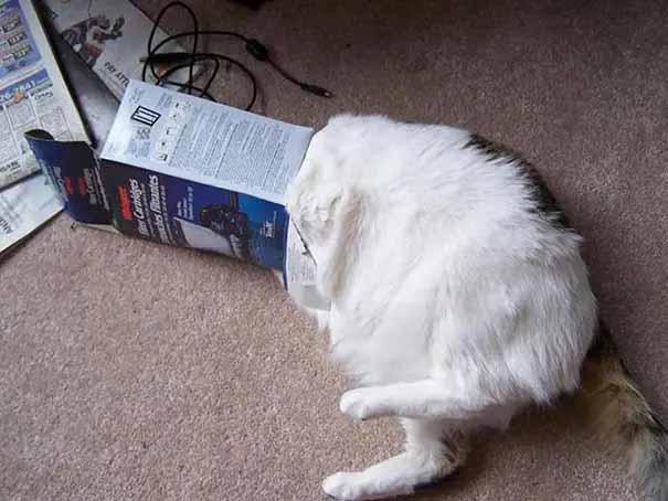 gatinhos mais desastrados da internet fotos