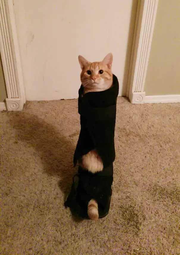 gatinhos mais desastrados da internet imagem