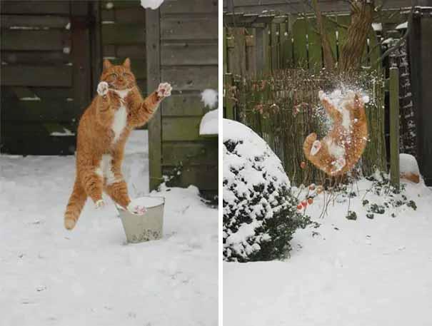 gatinhos mais desastrados da internet imagens