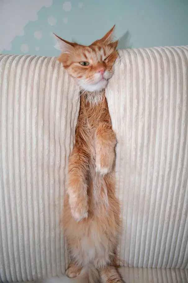 gatos comédia