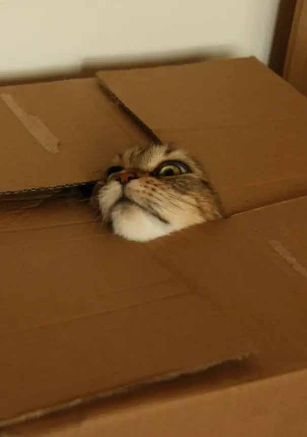gatos em caixas