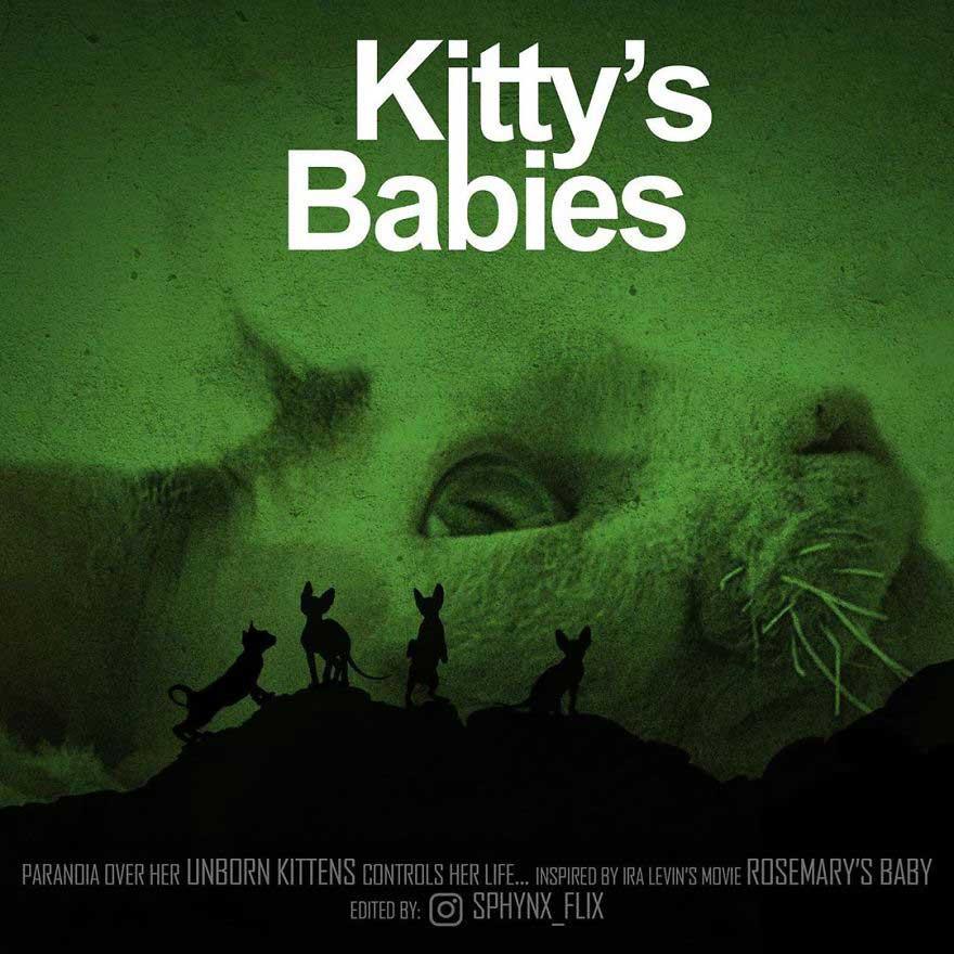 gatos-em-filmes-de-terror