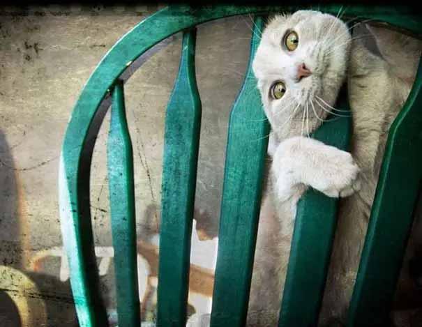 gatos enroscados