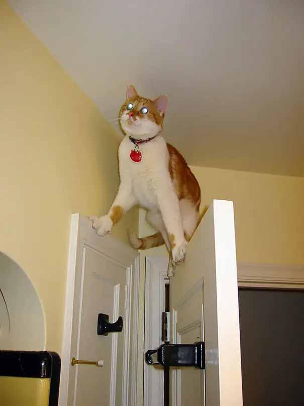 gatos equilibristas