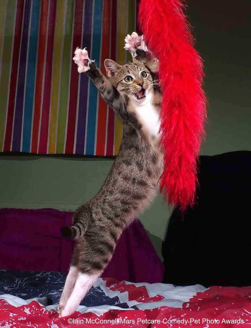 gatos hilários fotos