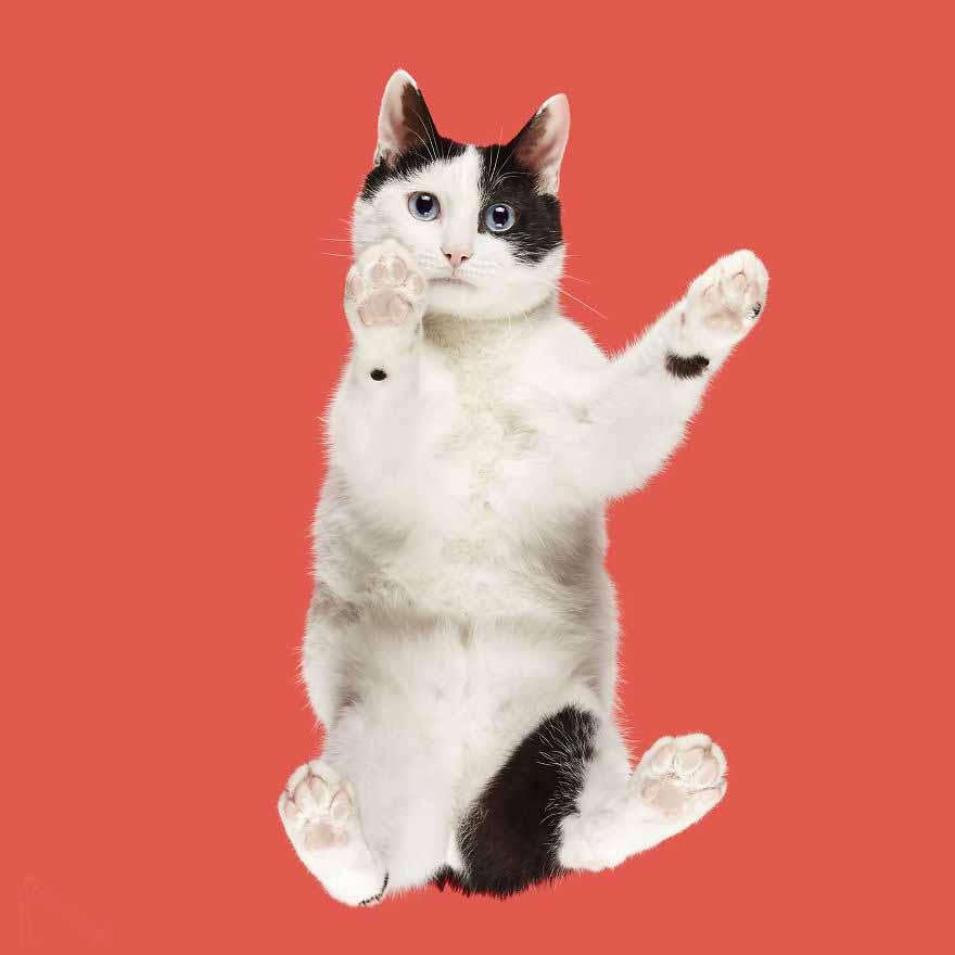 gatos mais fofos