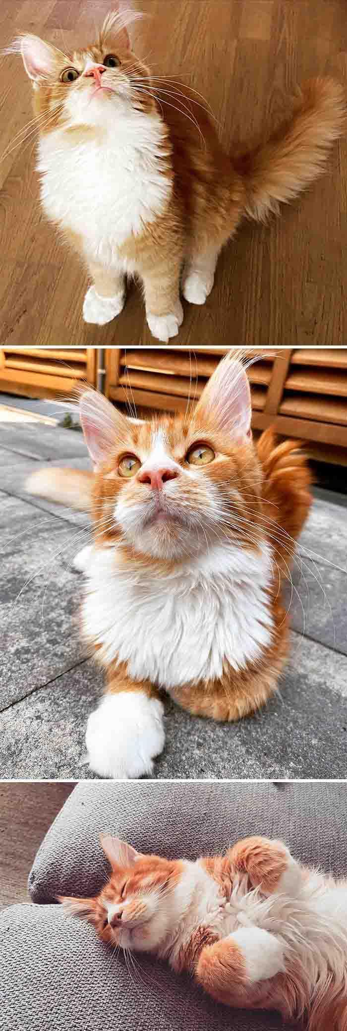 gatos mais lindos do mundo