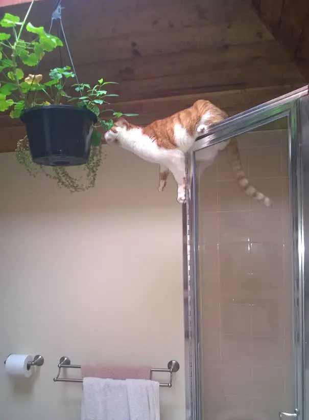 gatos que são um desastre