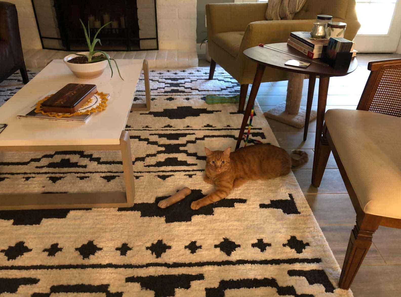 ilusão-de-ótica-gato