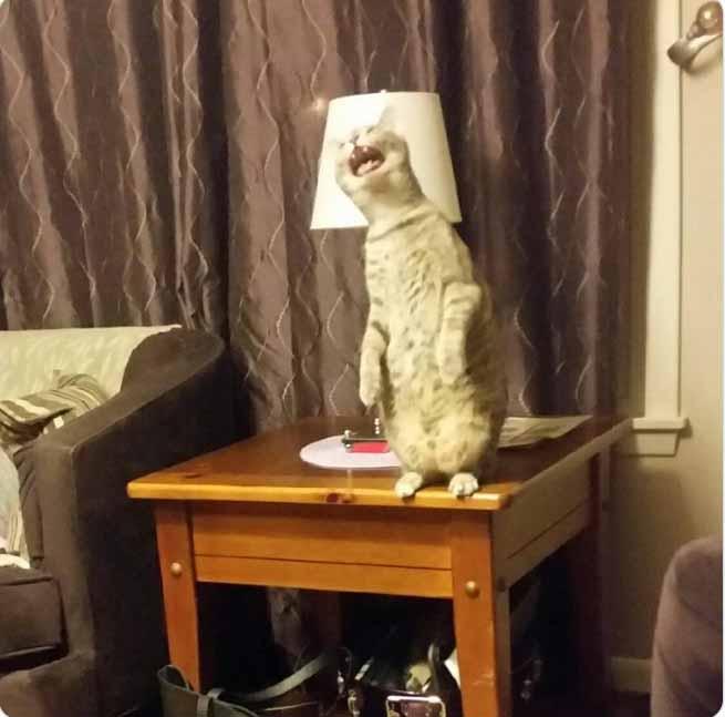 imagens os gatinhos menos fotogênicos