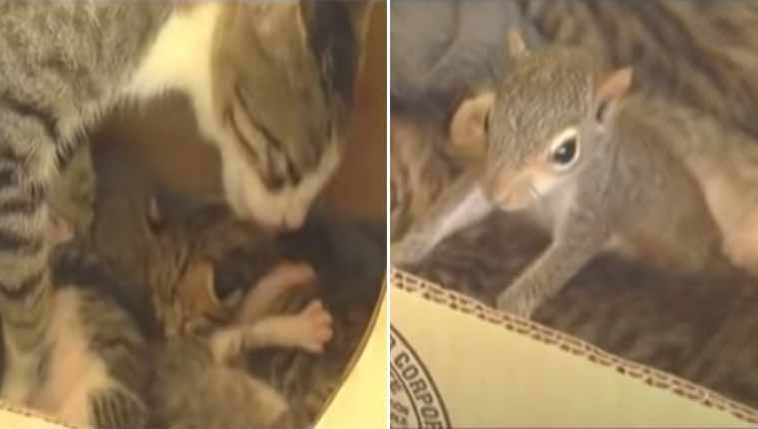 Gatinha-adota-esquilo