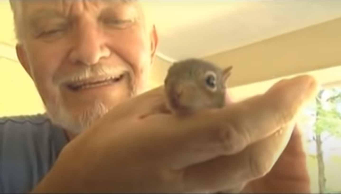 Gatinha-adota-esquilo-em-sua-ninhada