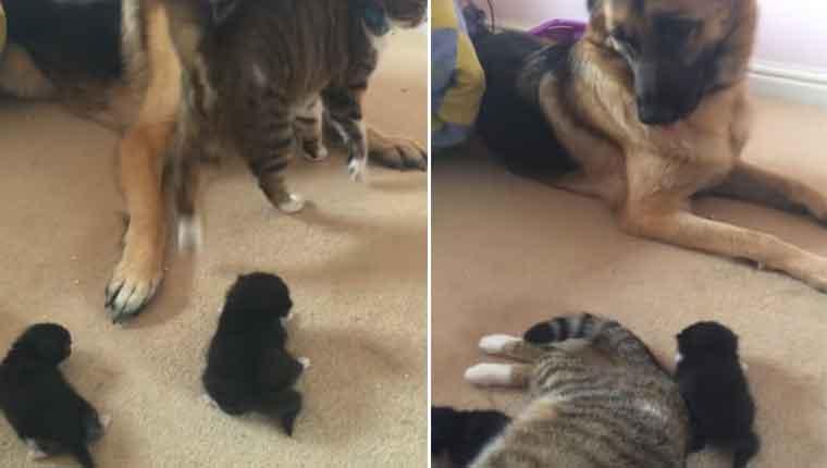 Gatinha-apresenta-seus-filhotes