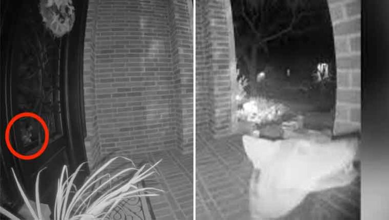 Gatinha-chateada-observa-coiote