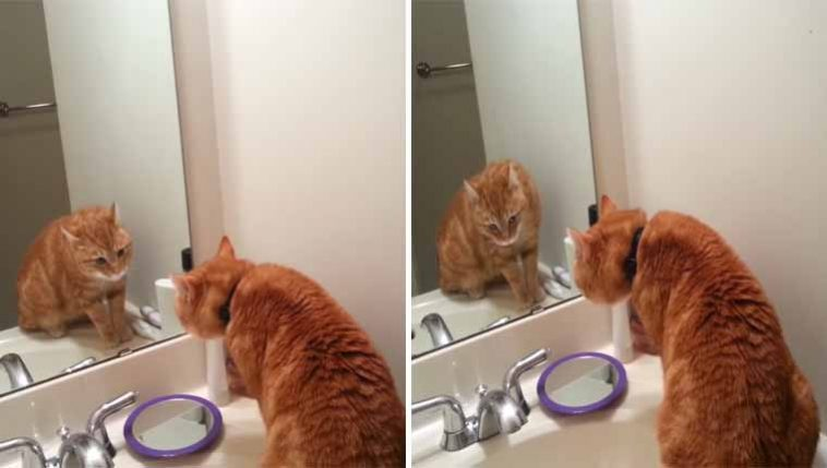 Gatinho-adotado-conversa-com-ele-mesmo