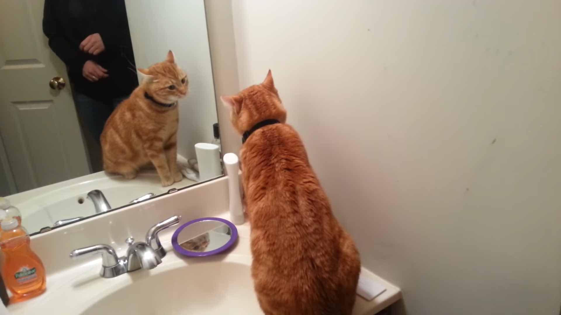 Gatinho-adotado-conversa-com-ele-mesmo-espelho