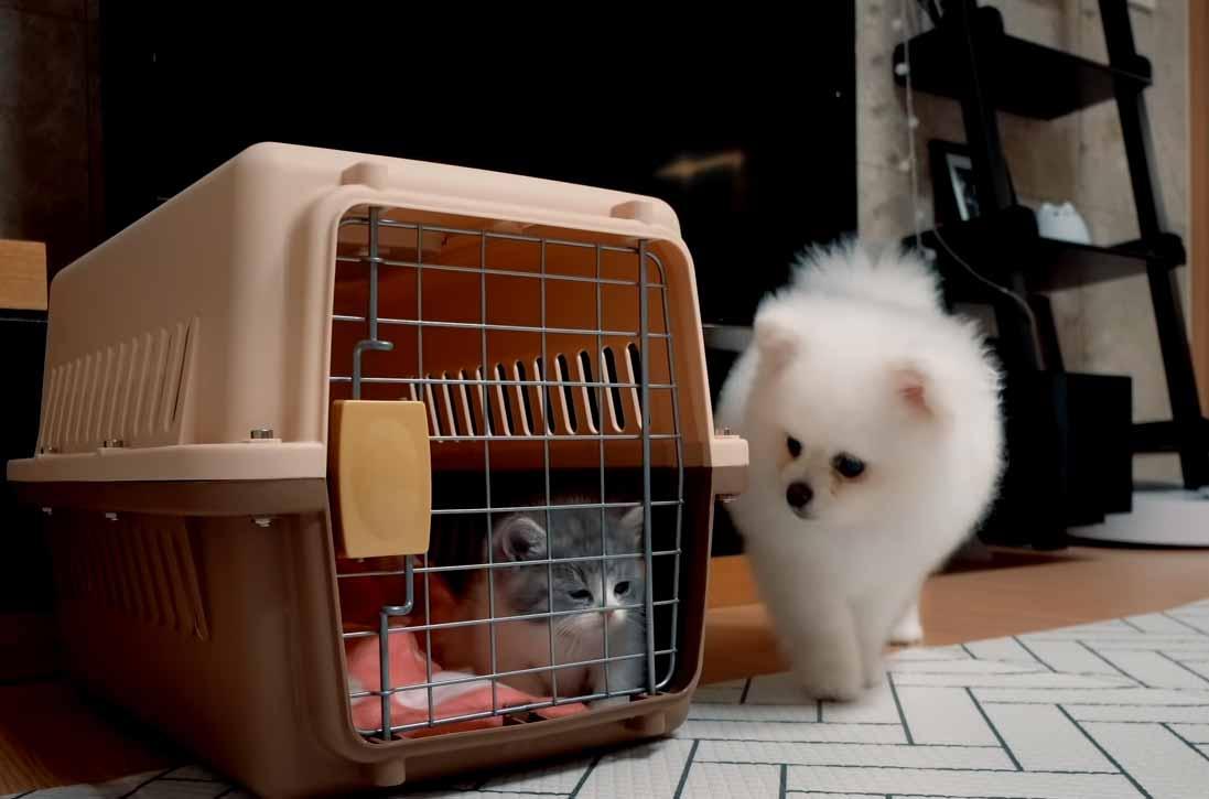 Gatinho-bravo-conhece-cachorros-família