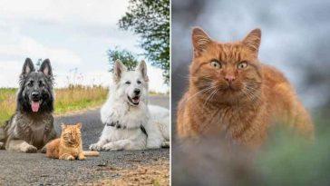 Gatinho-criado-por-cachorros