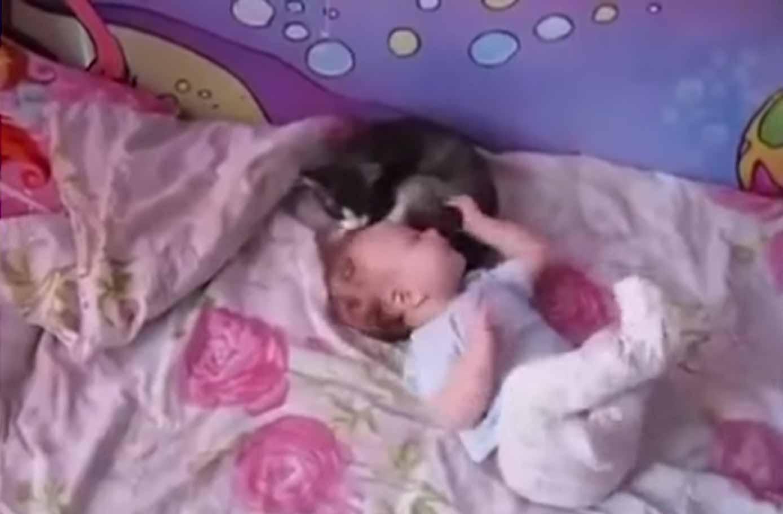 Gatinhos-protegem-bebês-em-vídeo