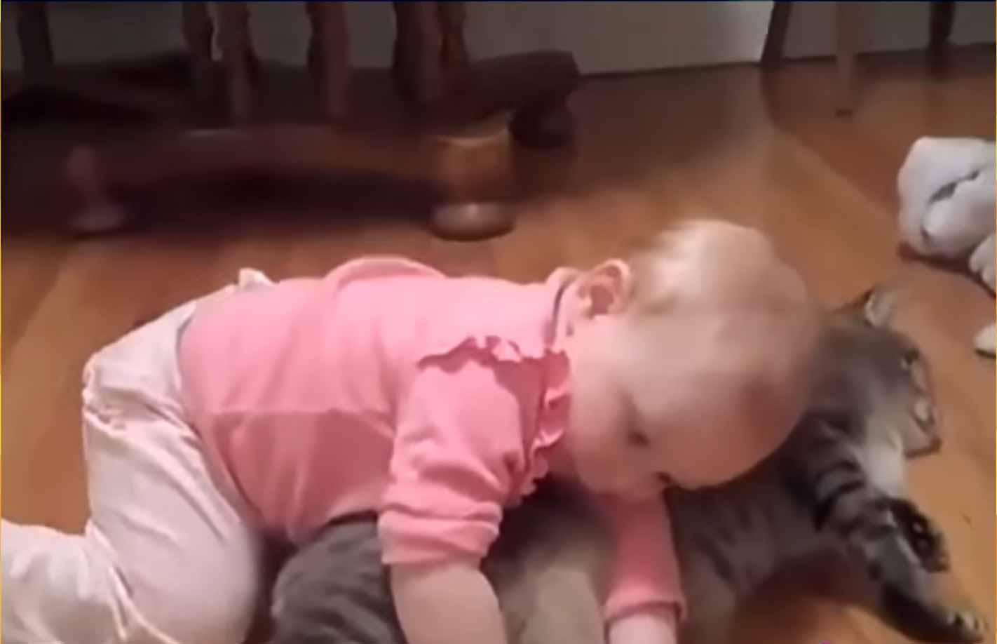Gatinhos-protegem-bebês-fotos
