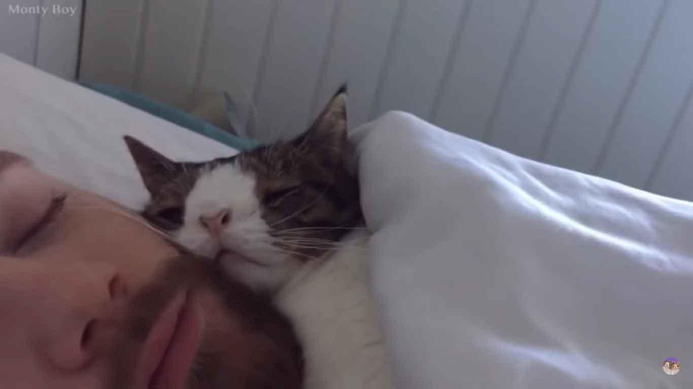 Homem-adotou-gatinho-de-abrigo-lindo