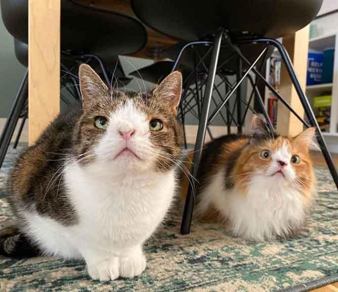 Homem-adotou-gatinho-de-abrigo-vídeo
