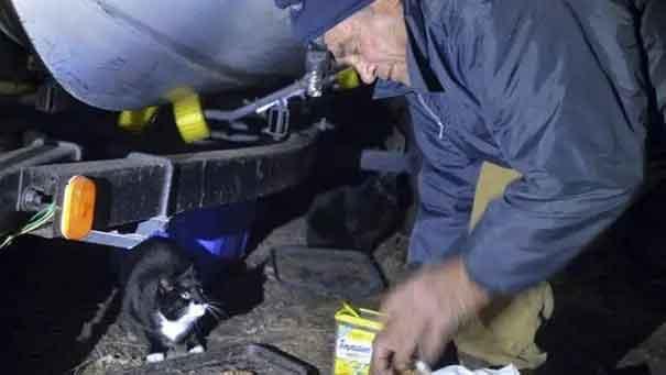 Homem-de-76-anos-ajuda-gatos