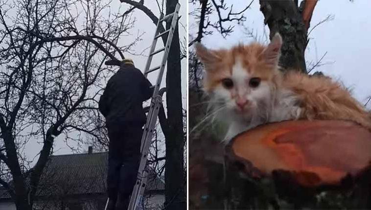 Resgate-arriscado-de-gatinho-em-árvore