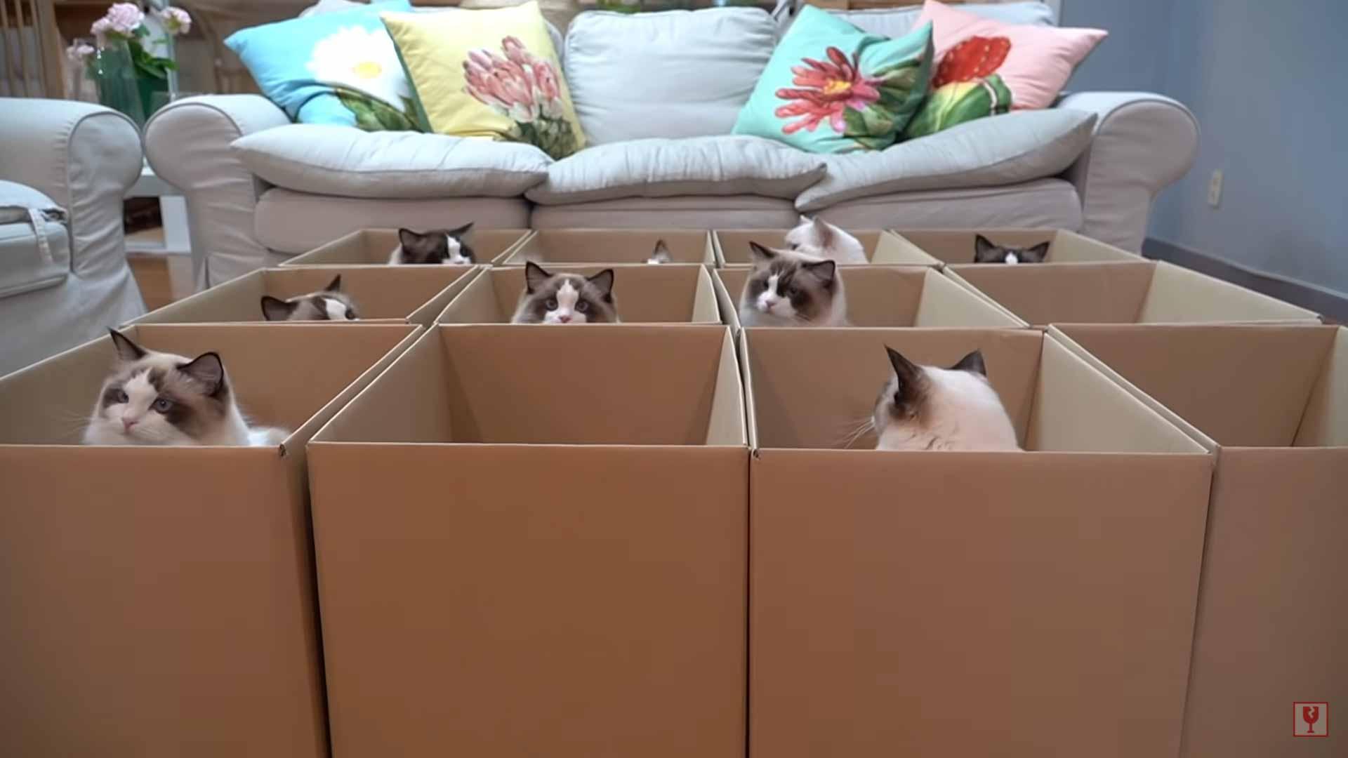 Várias-caixas-gatinhos