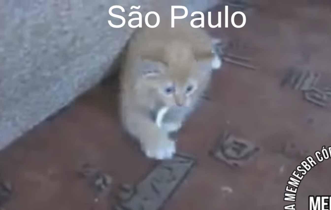 Vídeo-mostra-gatinhos-de-cada-estado-brasileiro