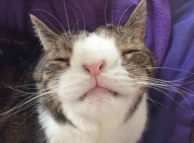 gatinho-espirra