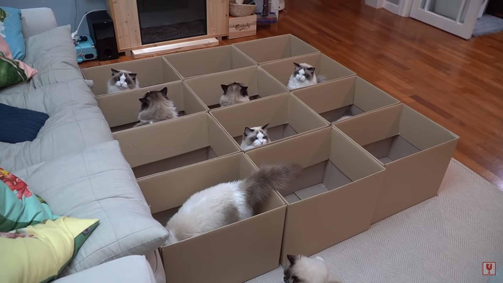 gatinhos-amam-caixas
