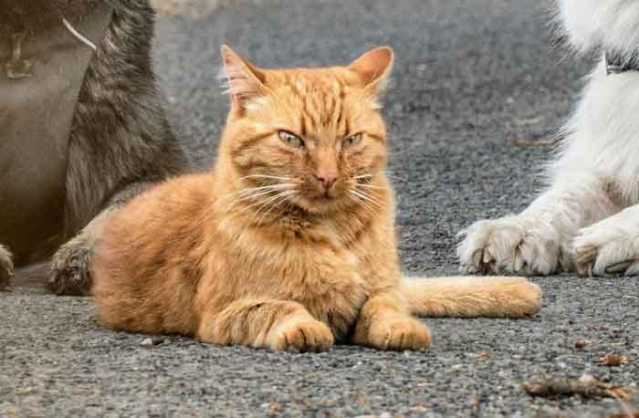 gato-irritado