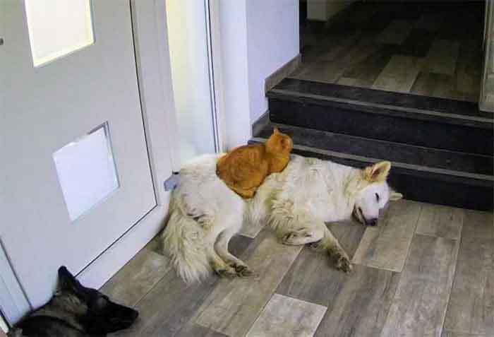 gato-resgatado-e-cachorro