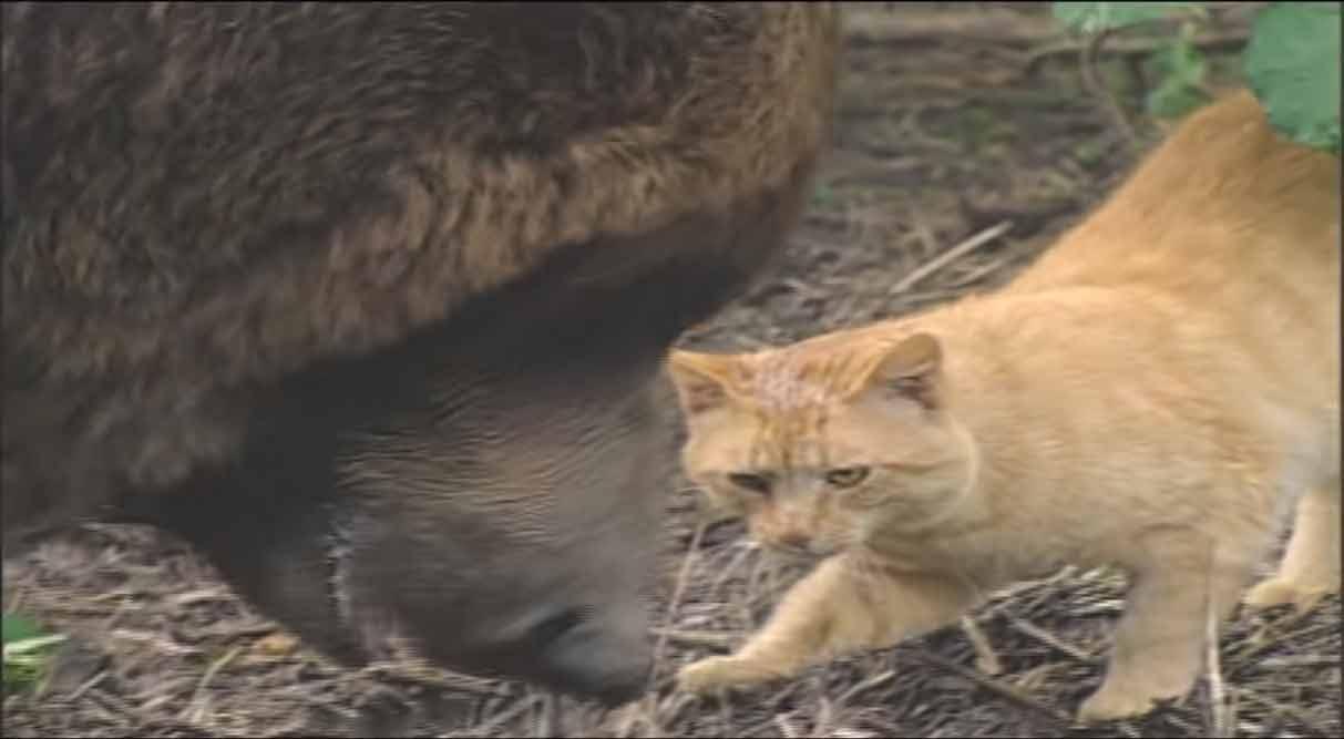 Amizade-entre-gatinho-e-urso-gigante-intrigante