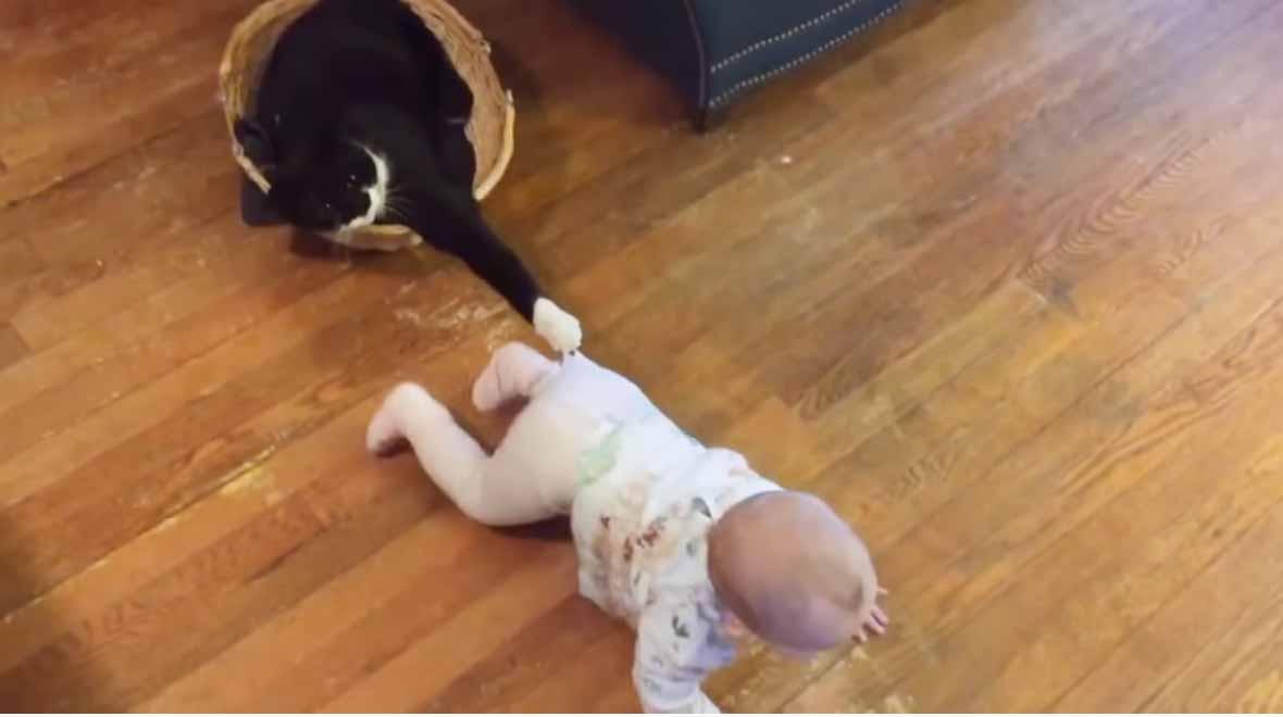 Bebês-e-gatinhos-são-os-melhores-amigos-do-mundo