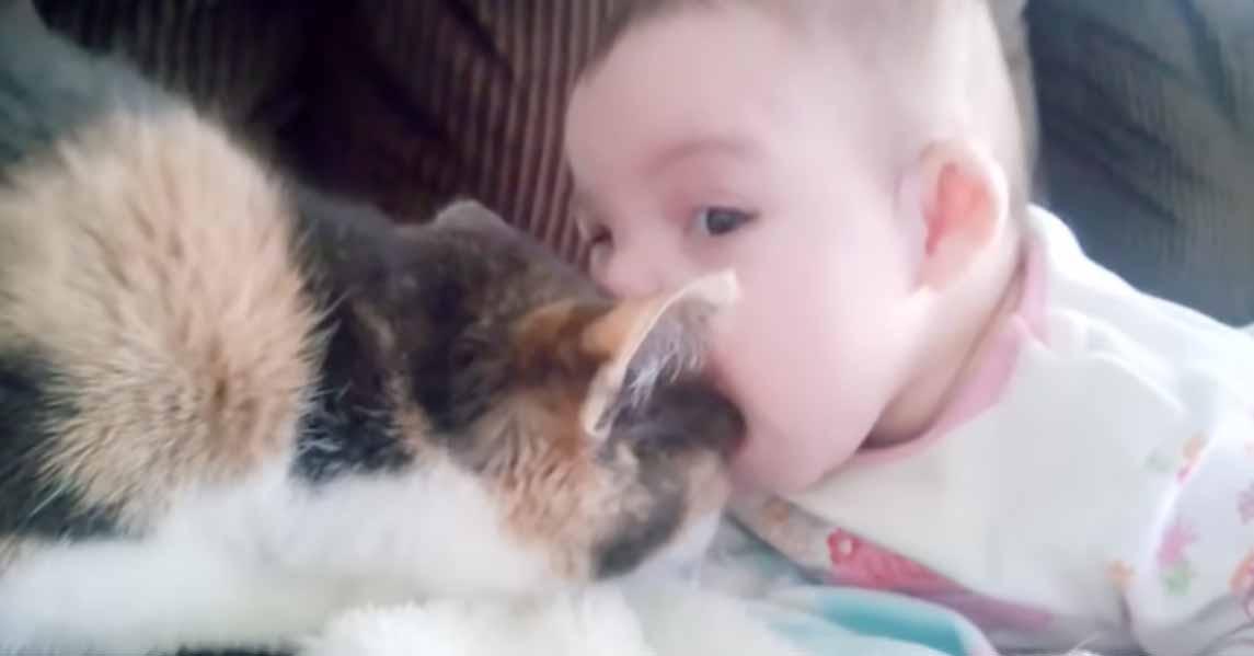 Bebês-e-gatinhos-são-os-melhores-amigos