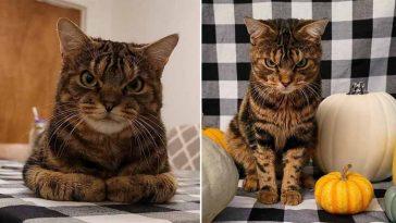 Conheça a gatinha irritada que está enganando milhões de pessoas
