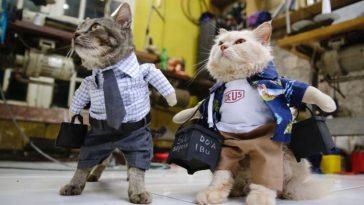 Cosplay para gatos