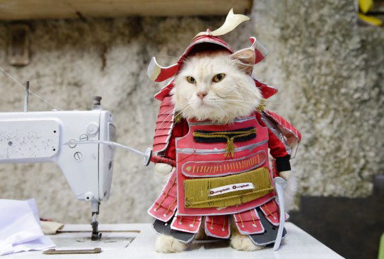 Cosplay para gatos fofos